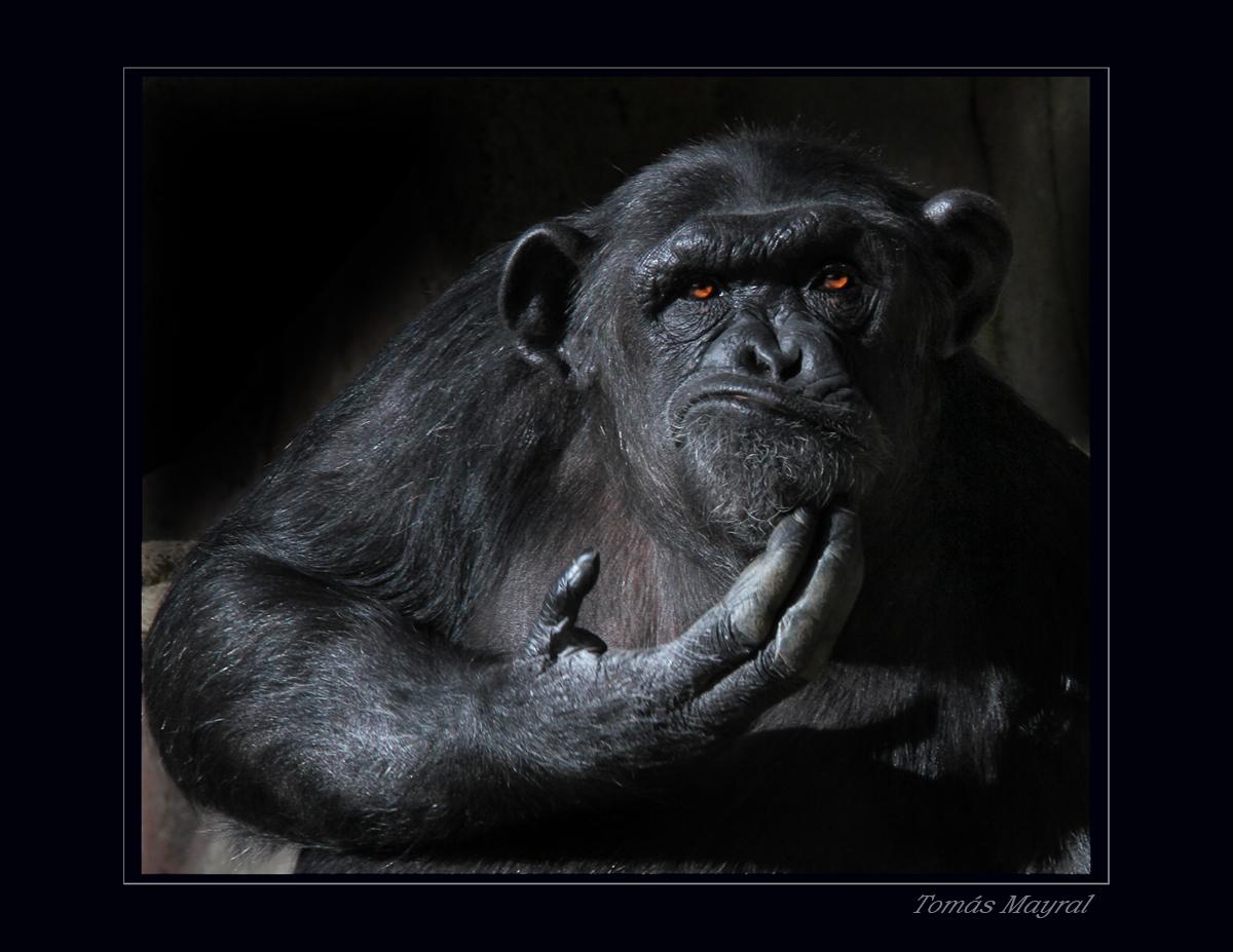 ?Tengo Monos en la Cara o Qué??
