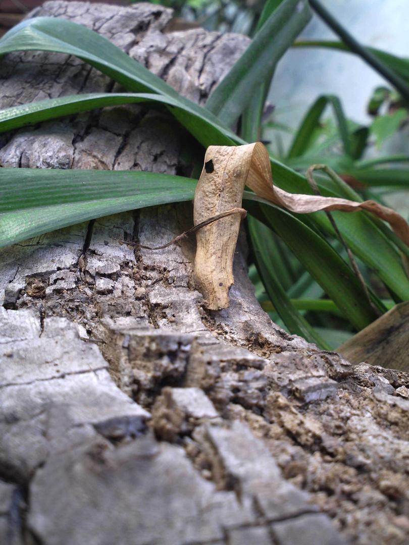 Tengo una fijación por los troncos...la madera,pensar que sale todo de nuestra tierra...es precioso