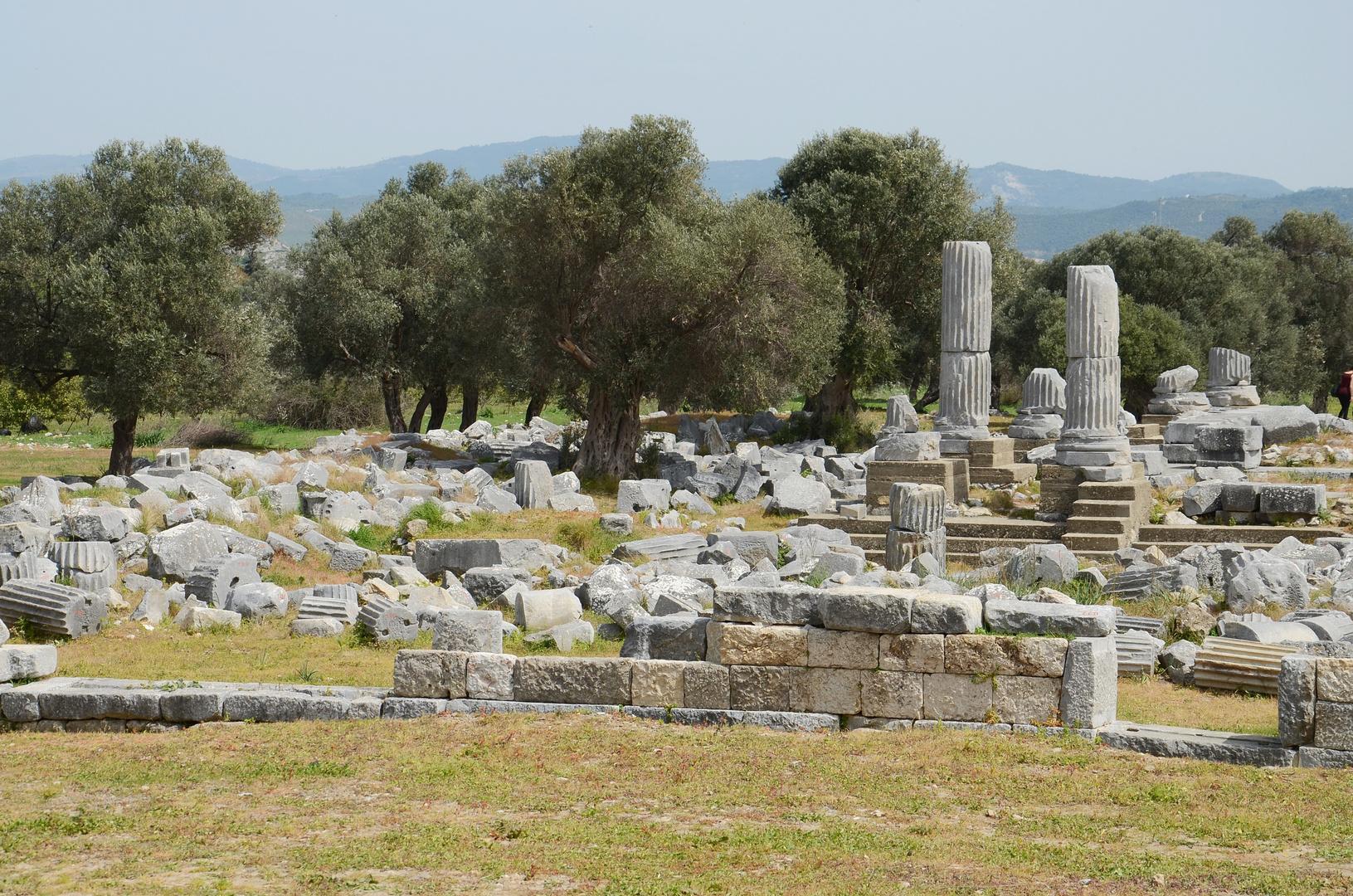 teos, olivenbäume... ;-)