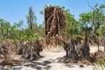 *** termite mound ***