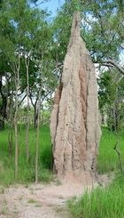 Termite Mount (2)