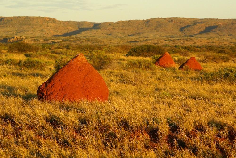 Termitenhügel im Cape Range National Park, Western Australia