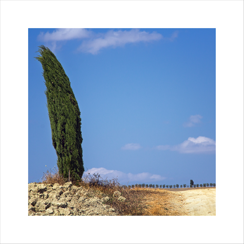 Terra Toscana VI