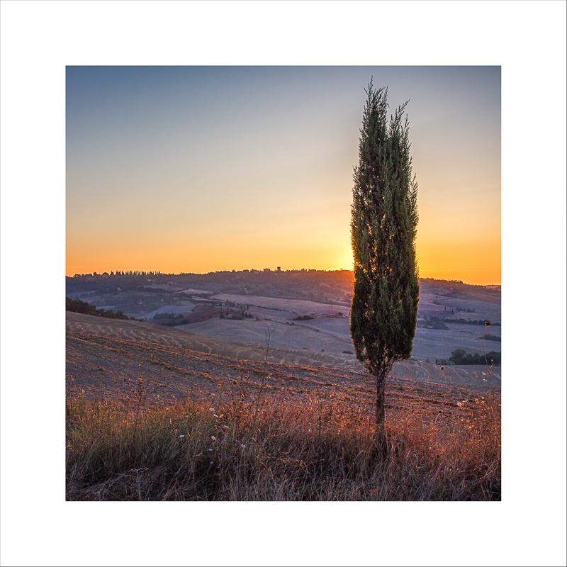 Terra Toscana VII