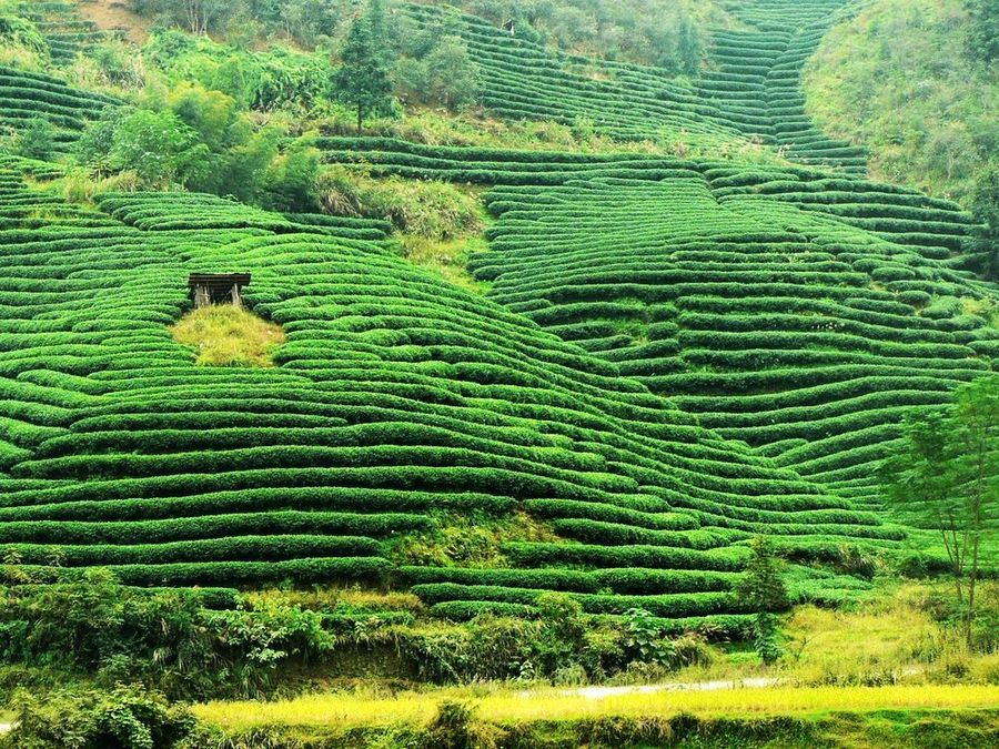 terrace ricefields (reloaded)