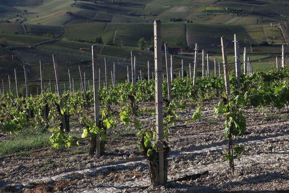 Terre da vino (3)