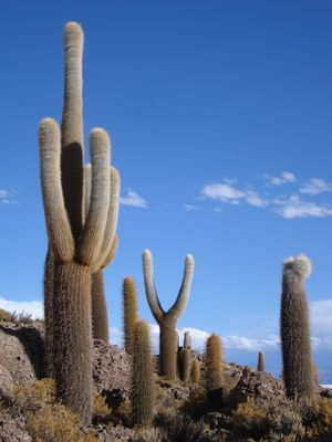 Terre de cactus