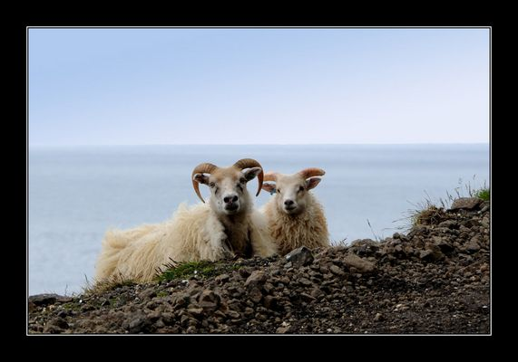Terres et faune d'Islande
