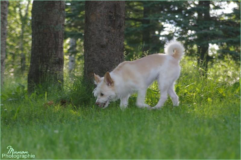 Terrier, femelle, 3 ans