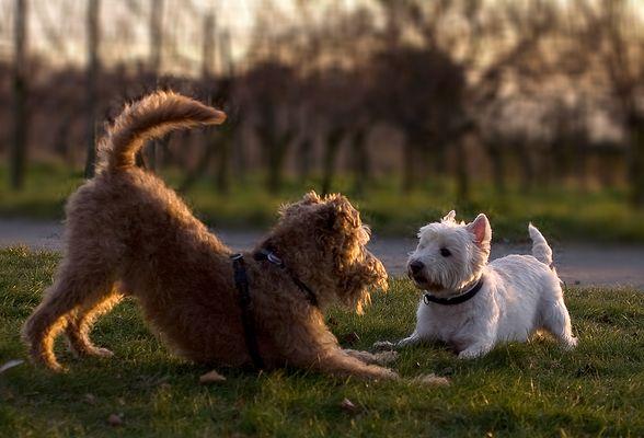 Terrier-Liebe ...