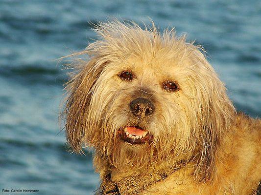 Terrier Mischling Portrait