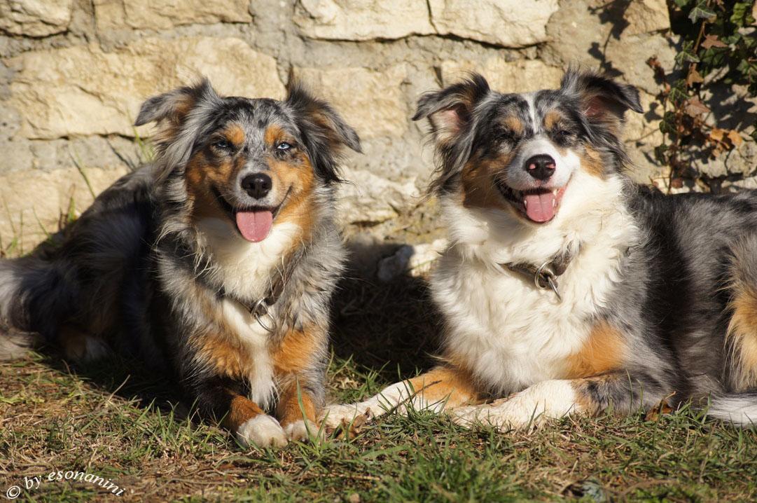 ' Test- Hunde '
