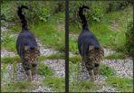 Testbild Bildteiler: Katze [3D]