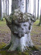 """""""Teufelsbaum"""" im Geisterwald von Nienhagen (Ostsee)"""