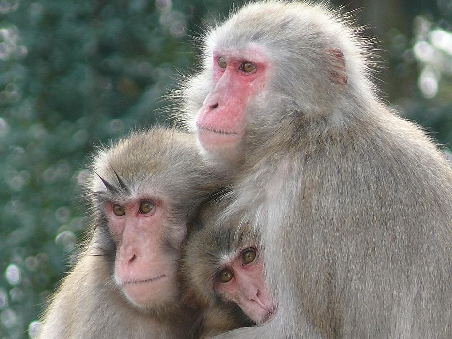 ...teuflisches Trio :-)