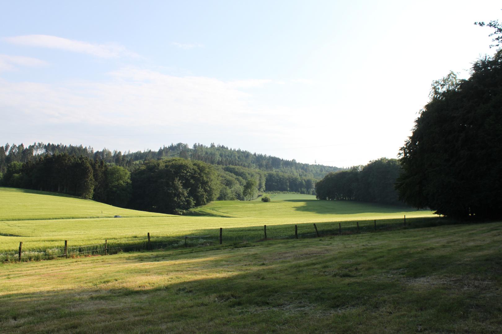 Teutoburger Wald Idylle