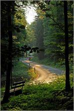 Teutoburger Wald im Frühsommer