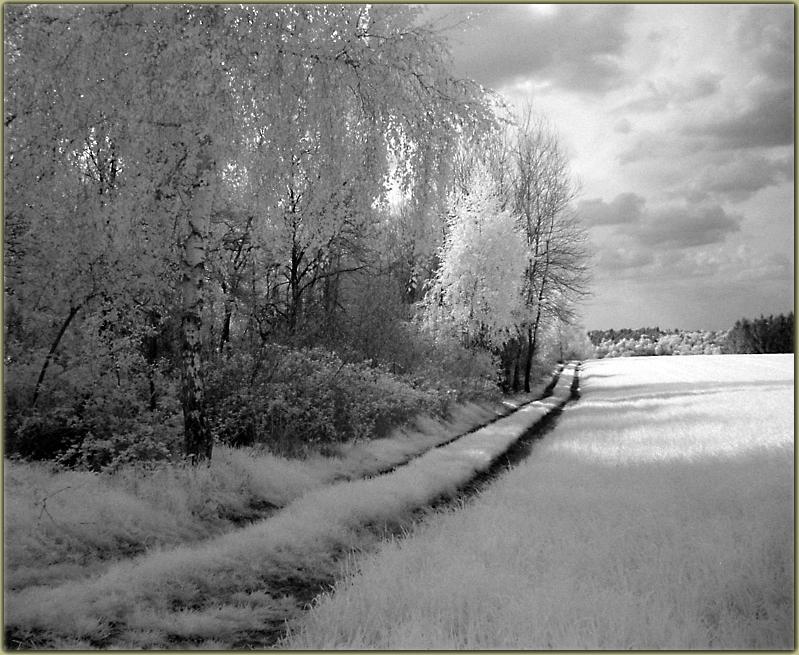 Teutoburger Wald in IR