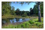 Teverener Heide - Teich im Moor