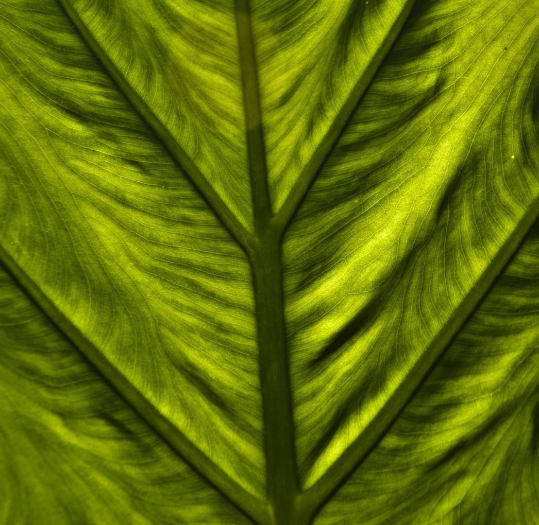 Textures vegetals