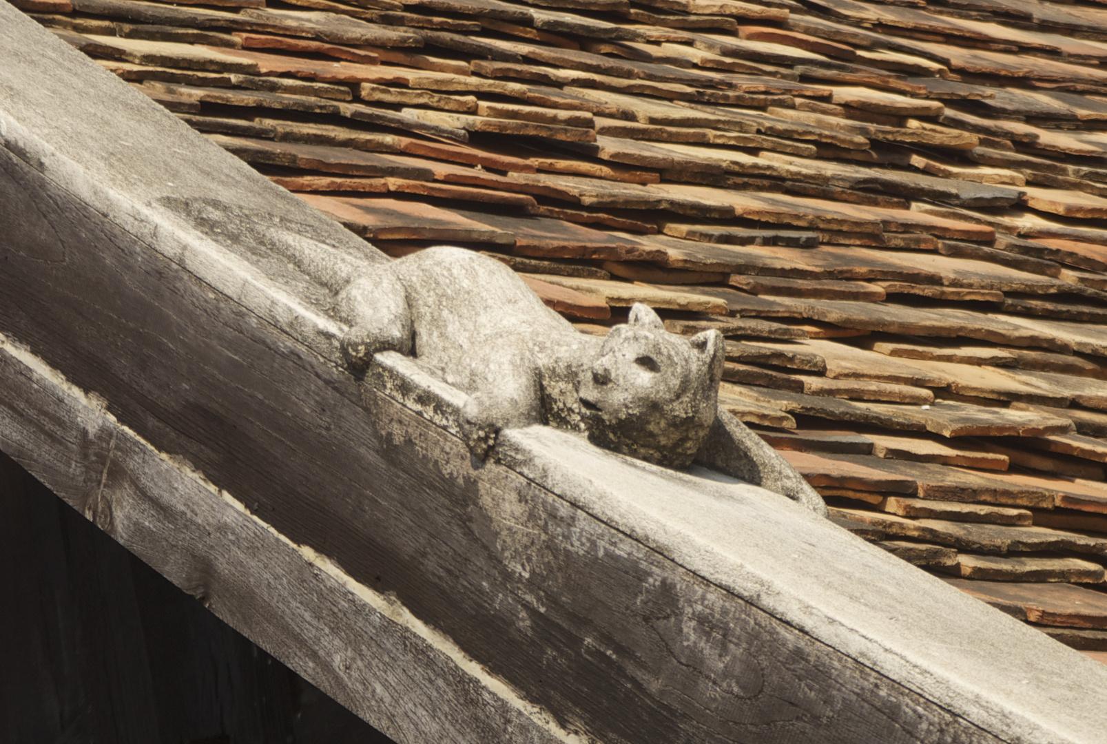 Thai Katze mal etwas anders