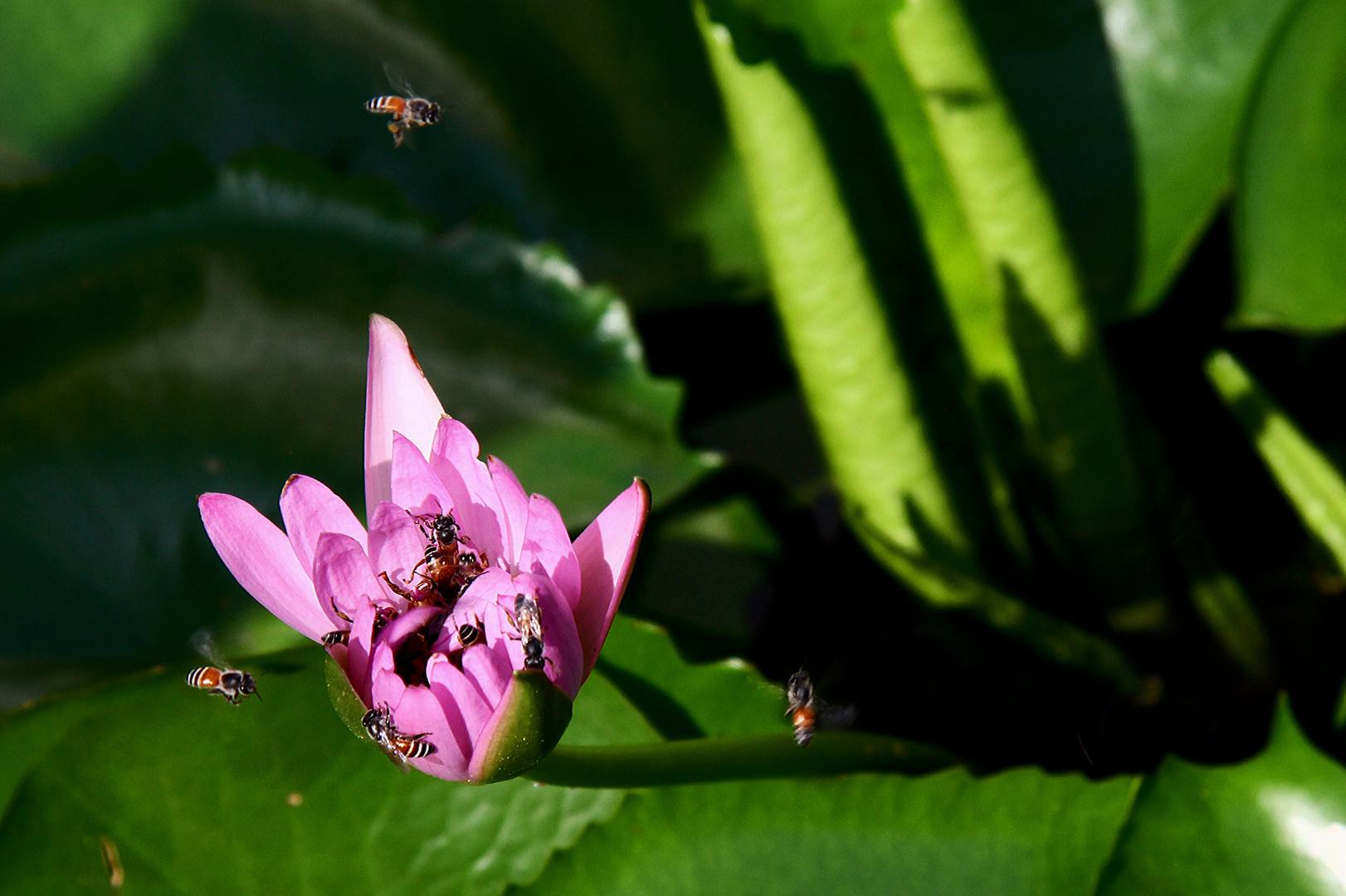 Thailändische Bienen...