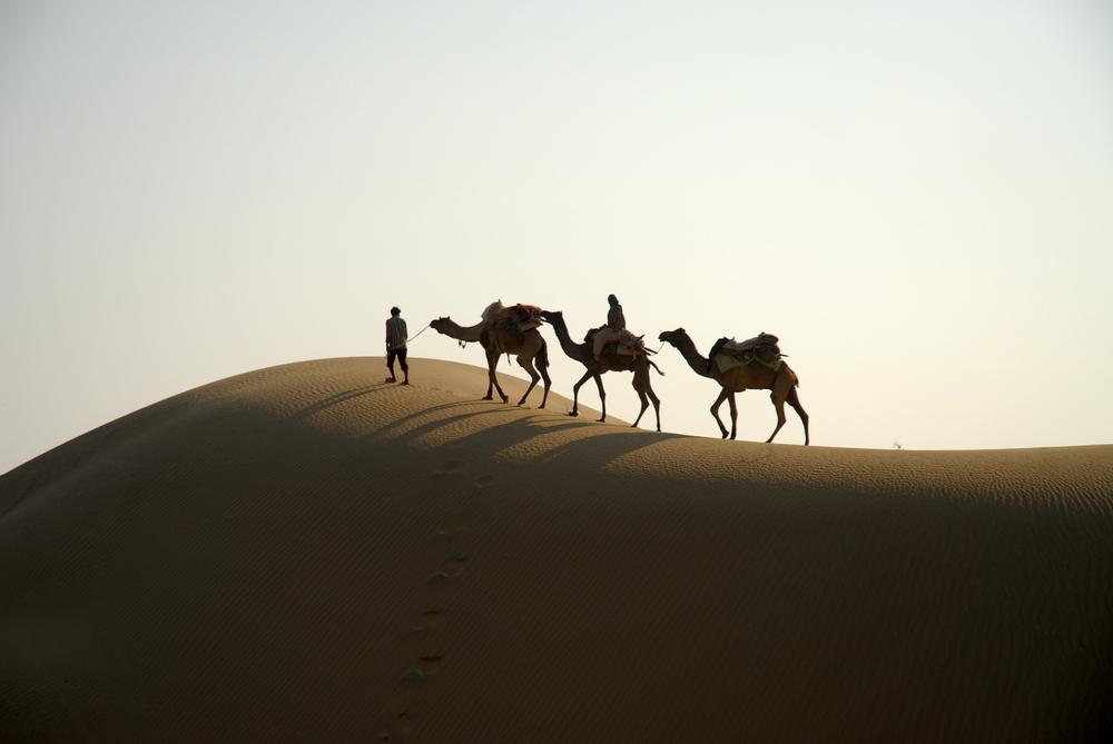 Thar in Rajastan / Indien