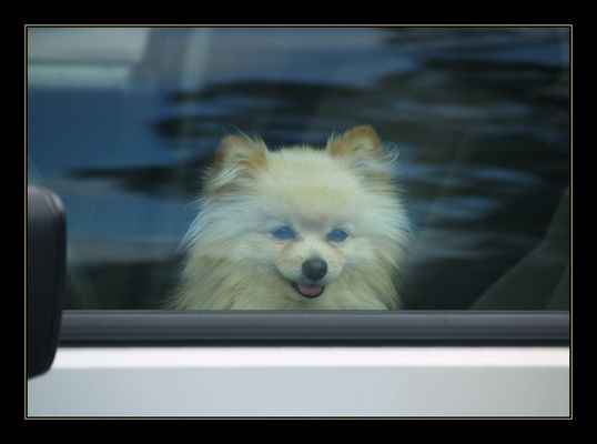 . . . that doggie in the window