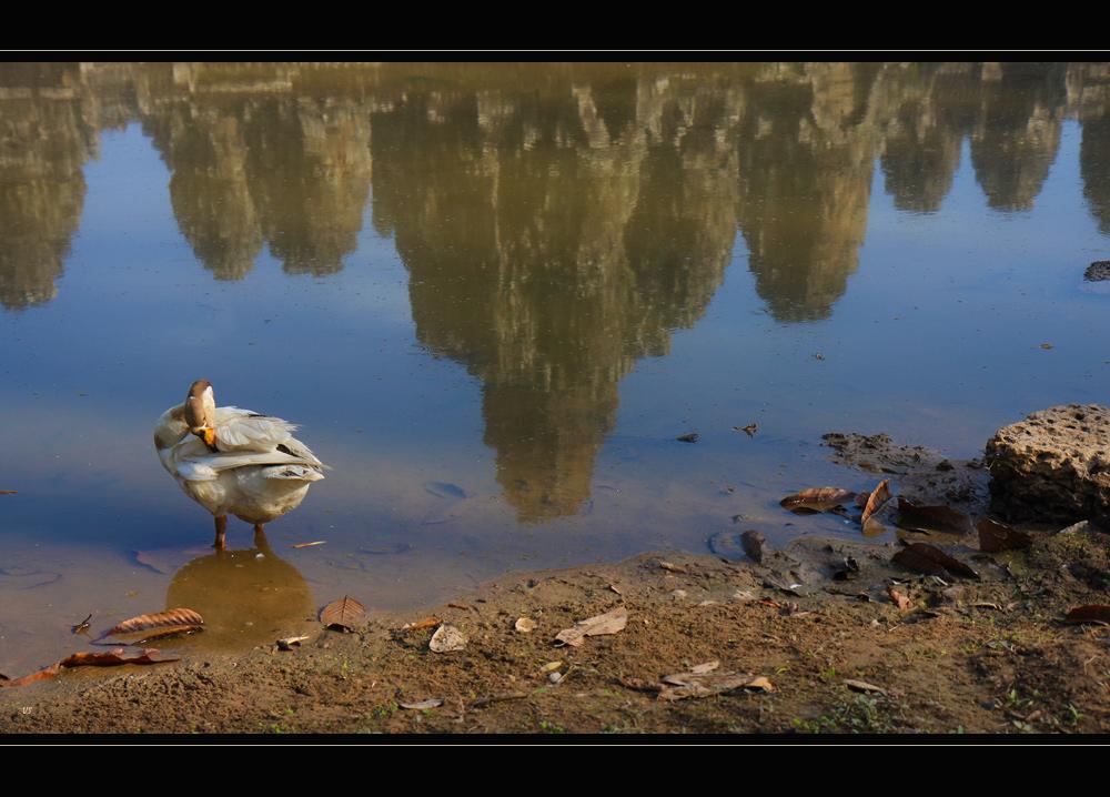 The  AngkorThom's duck