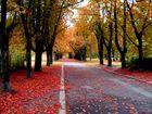 the Autumn comes