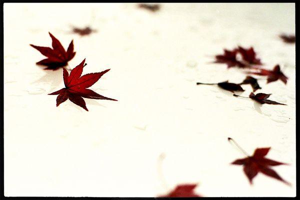 ___the autumn leaf_