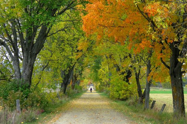 the autumn walker