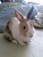 The baby Bunny in the future