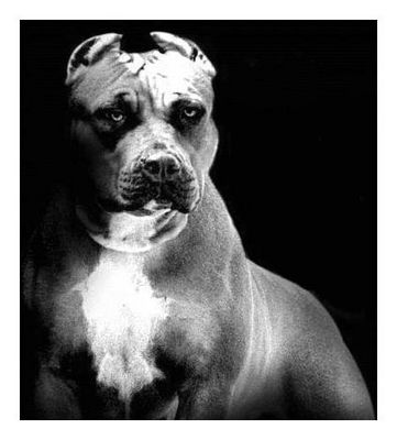 """The Bad Dog"""