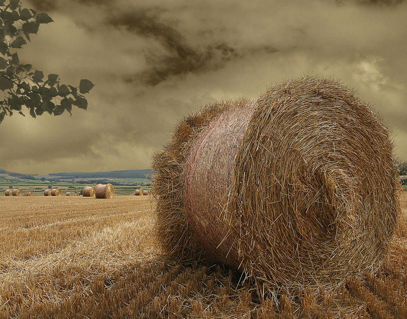 the bale