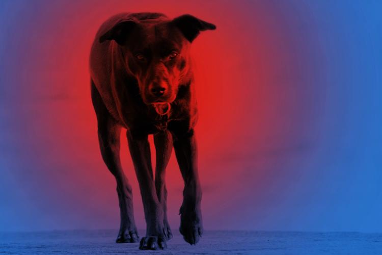 The Baskerville´s Dog