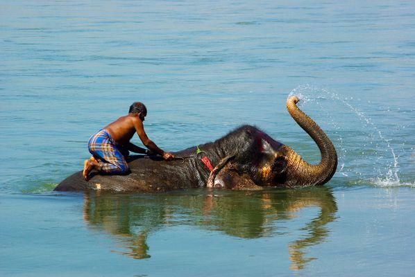 The bath of the elephant