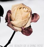 THE BEAUTY OF A DYING ROSE