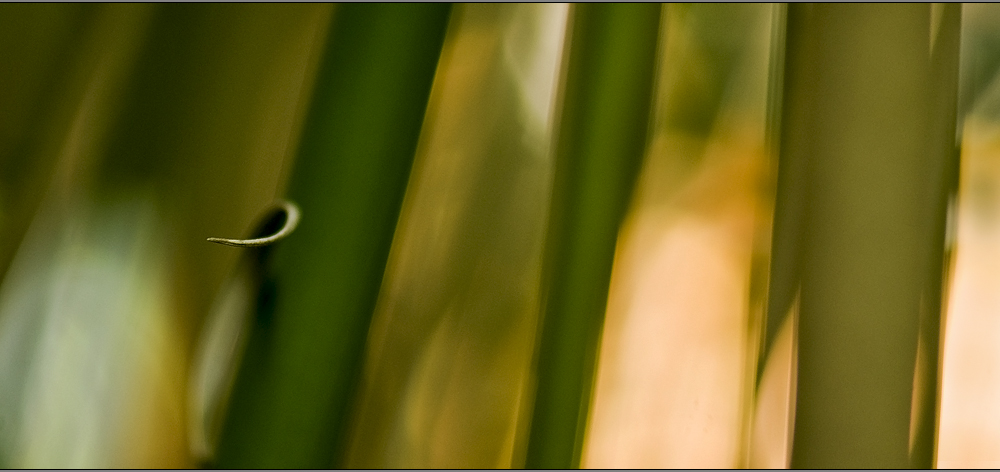 the beauty of bamboo #2