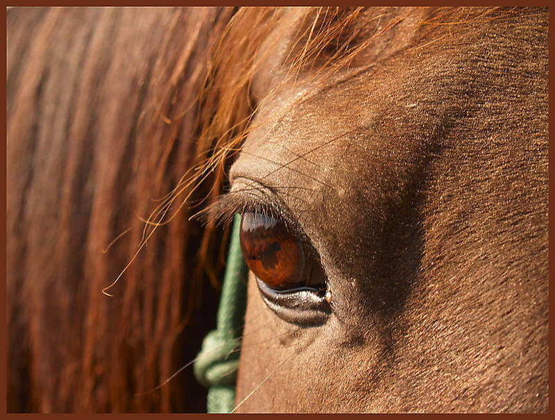 The beauty of horses...