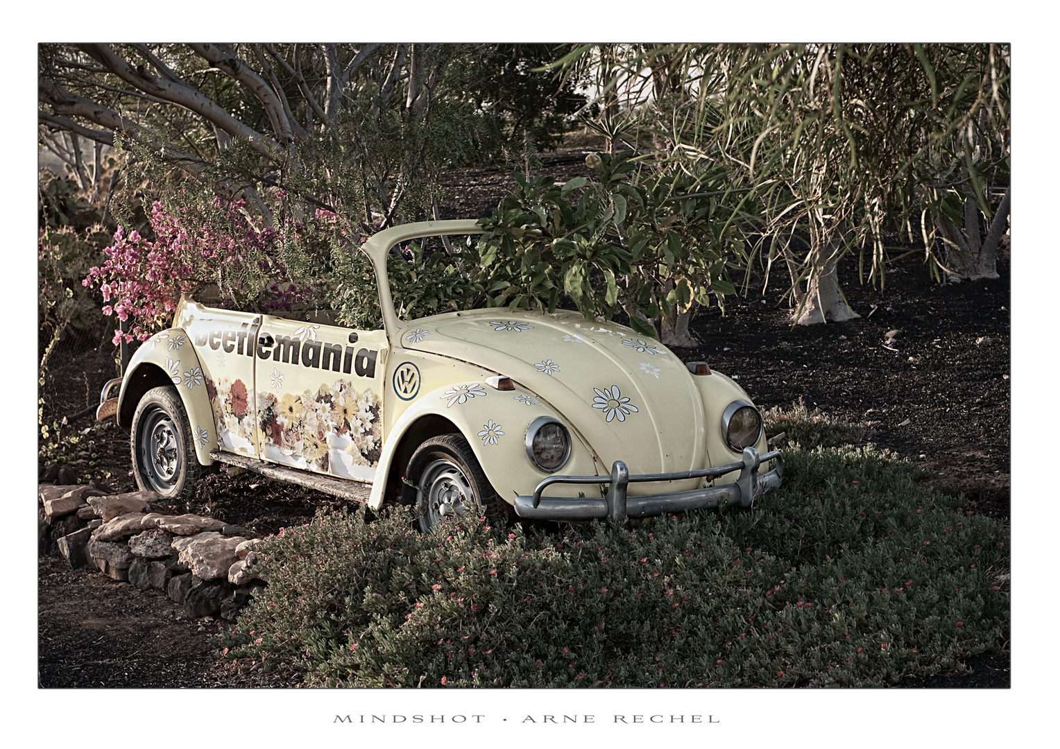 The Beetle - Fundstueck