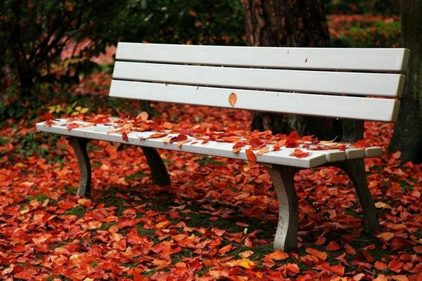 """""""The Bench""""..."""