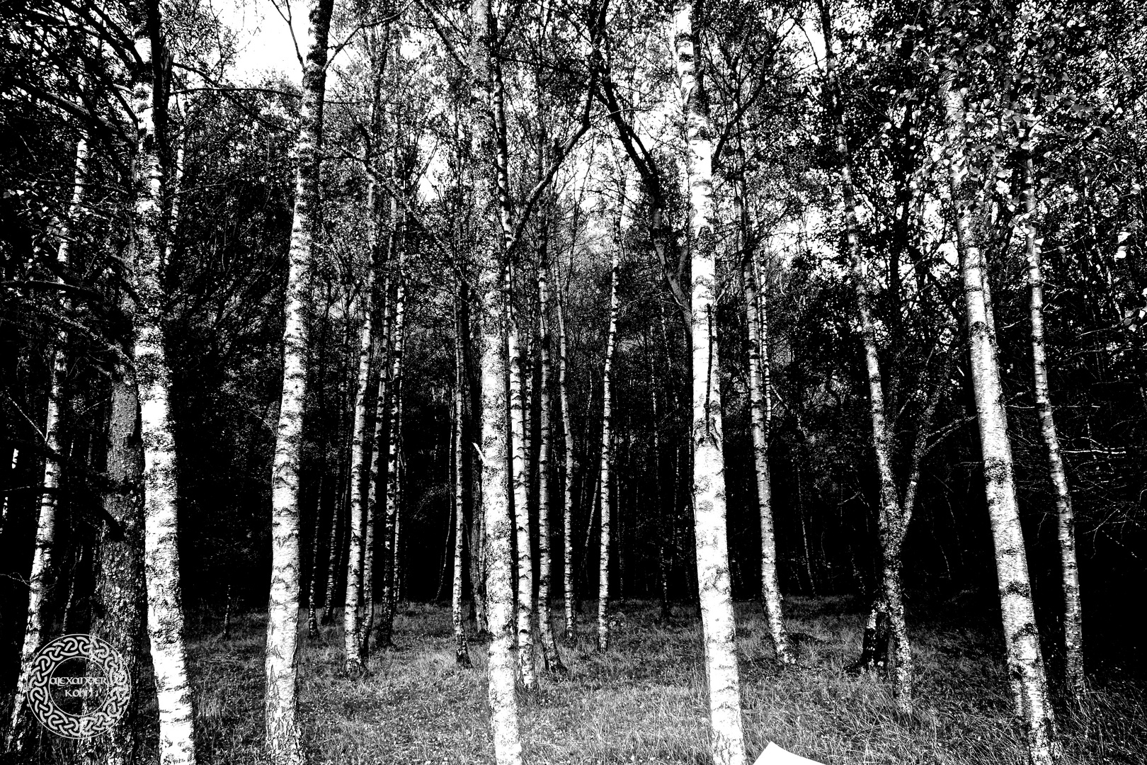 the birches of Loch Katrine