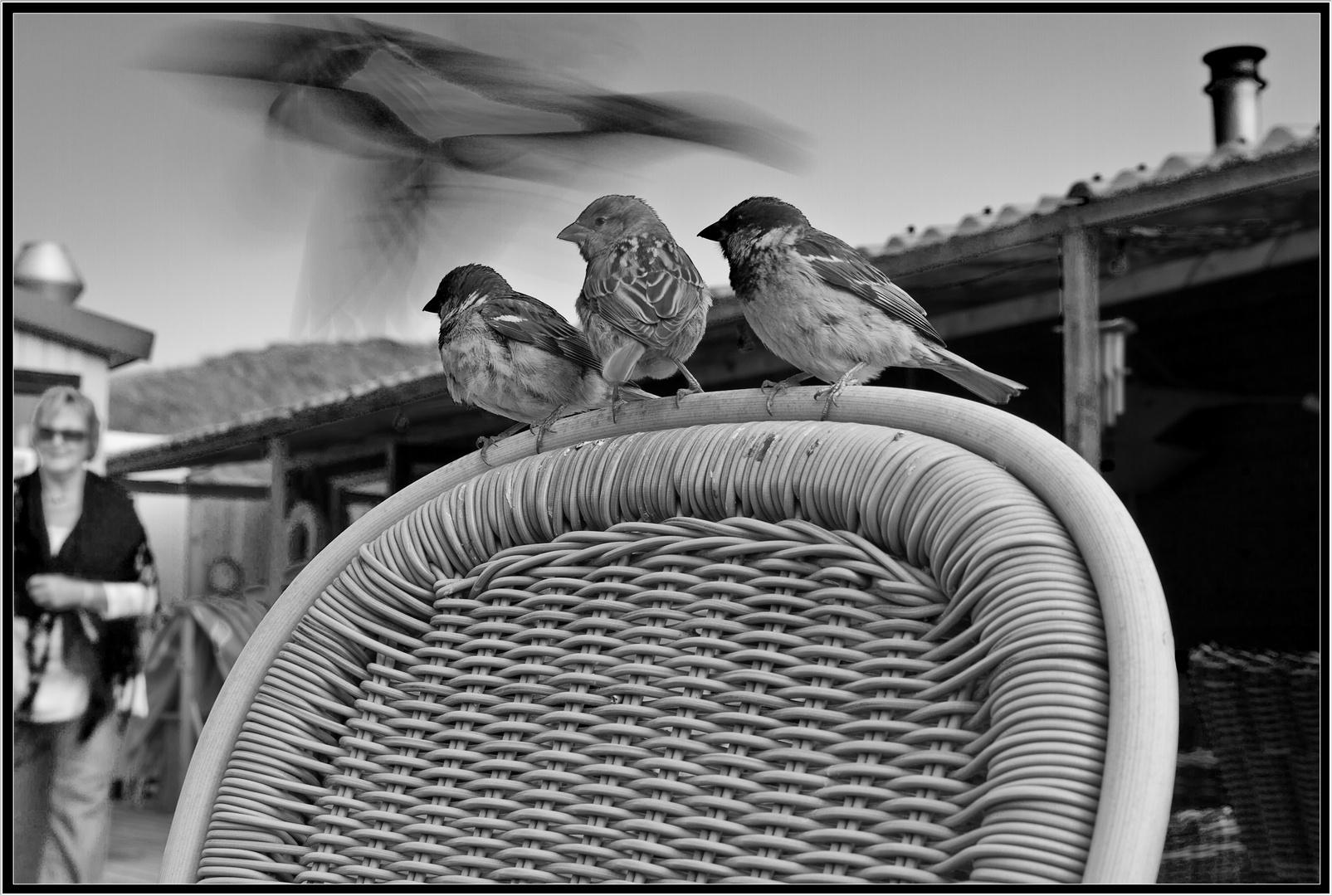 The Birds - Remake