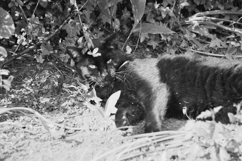 The Black Cat²