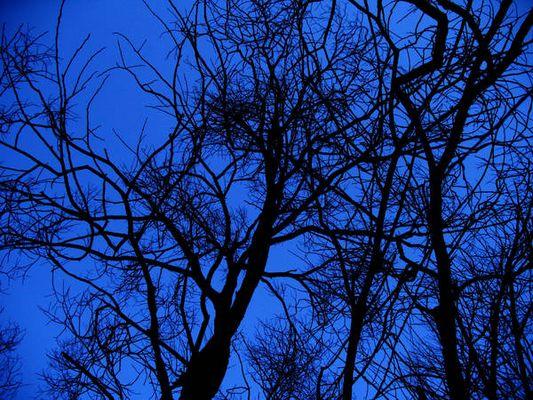 +*+* The black trees +*+*