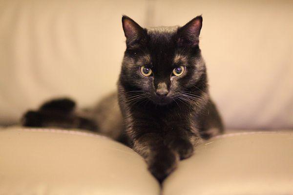 The blackcat