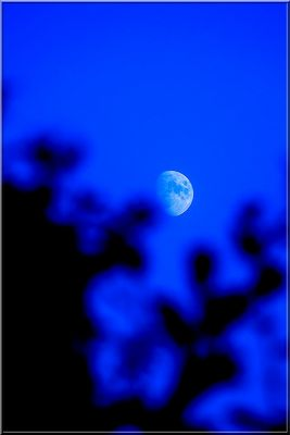 The Blue Moon