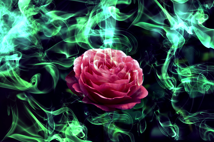 The Breath of the Magic Rose