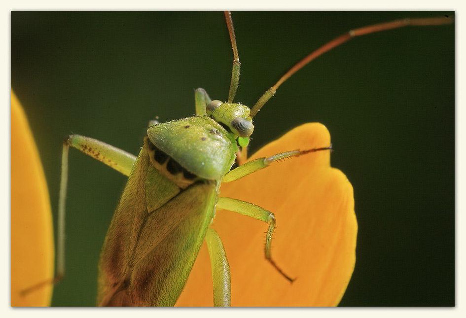 The bug II